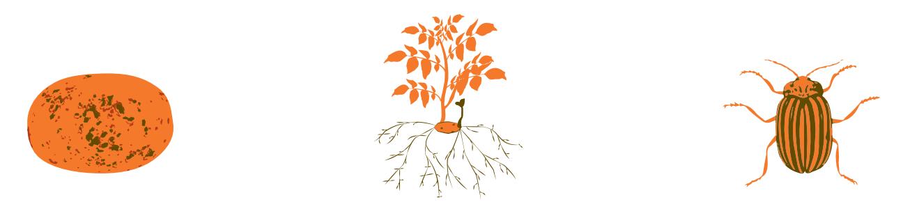 Agronomic image of potato pests
