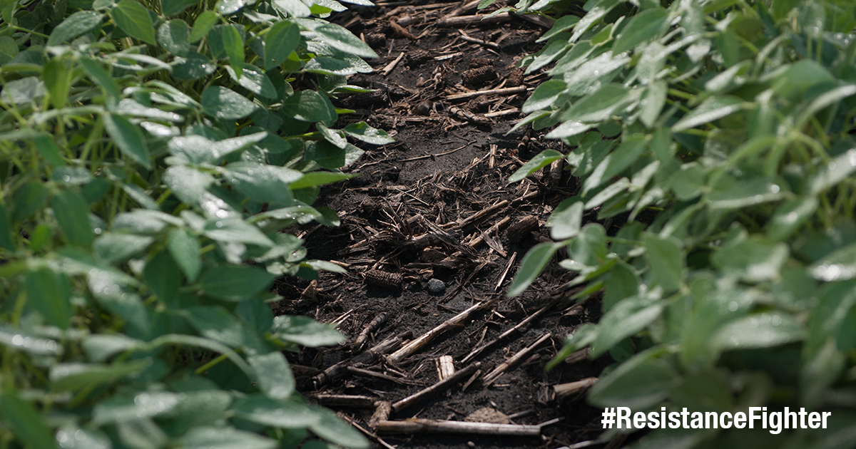 """This agronomic photo shows a close-up of weeds with the hashtag, """"ResistanceFighter."""""""