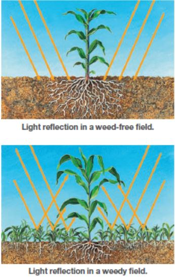 This illustrated image shows light reflection from weeds.