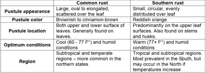 This chart compares southern rust to common rust.