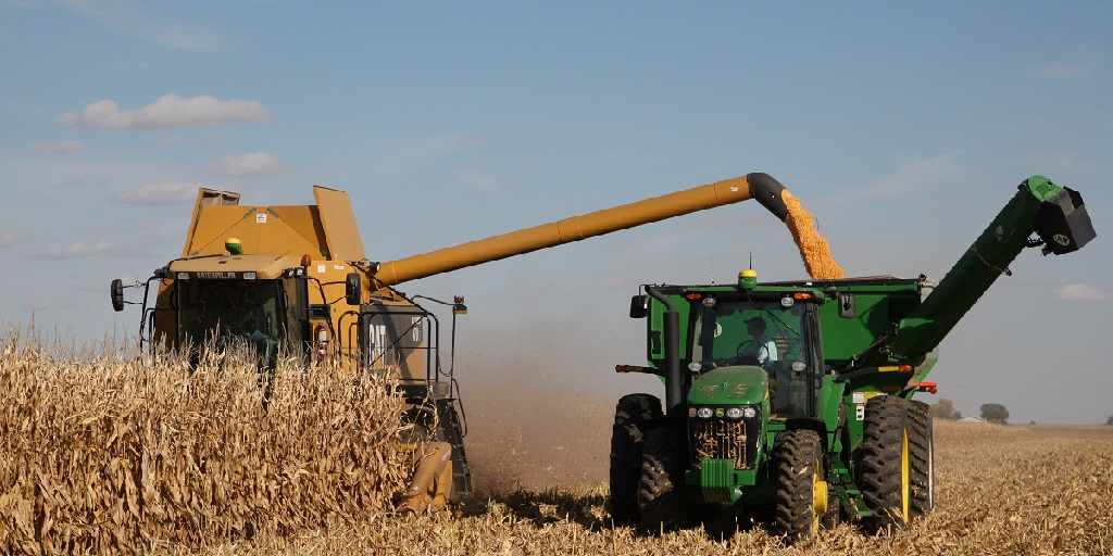This agronomic image shows corn harvest