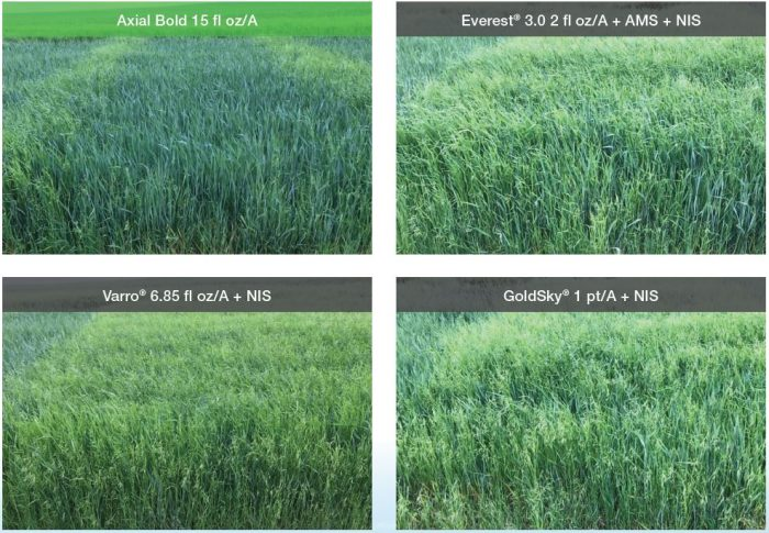 This agronomic image shows comparisons between Axial Bold and competitor products when it comes to grass weed control