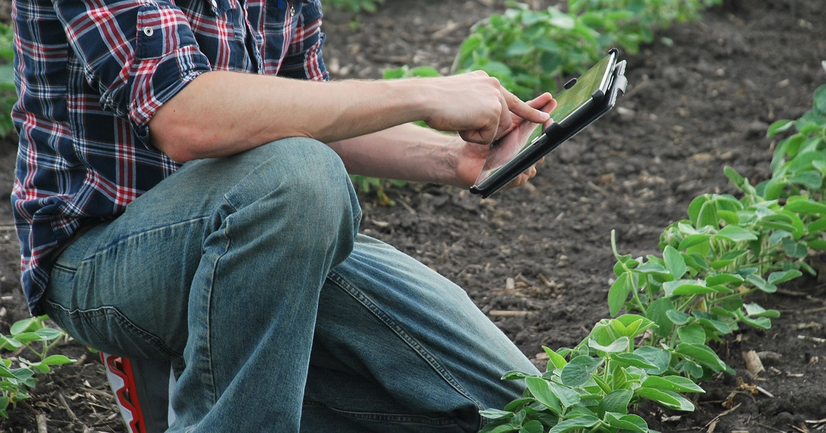 This agronomic image shows a grower using technology in a soybean field