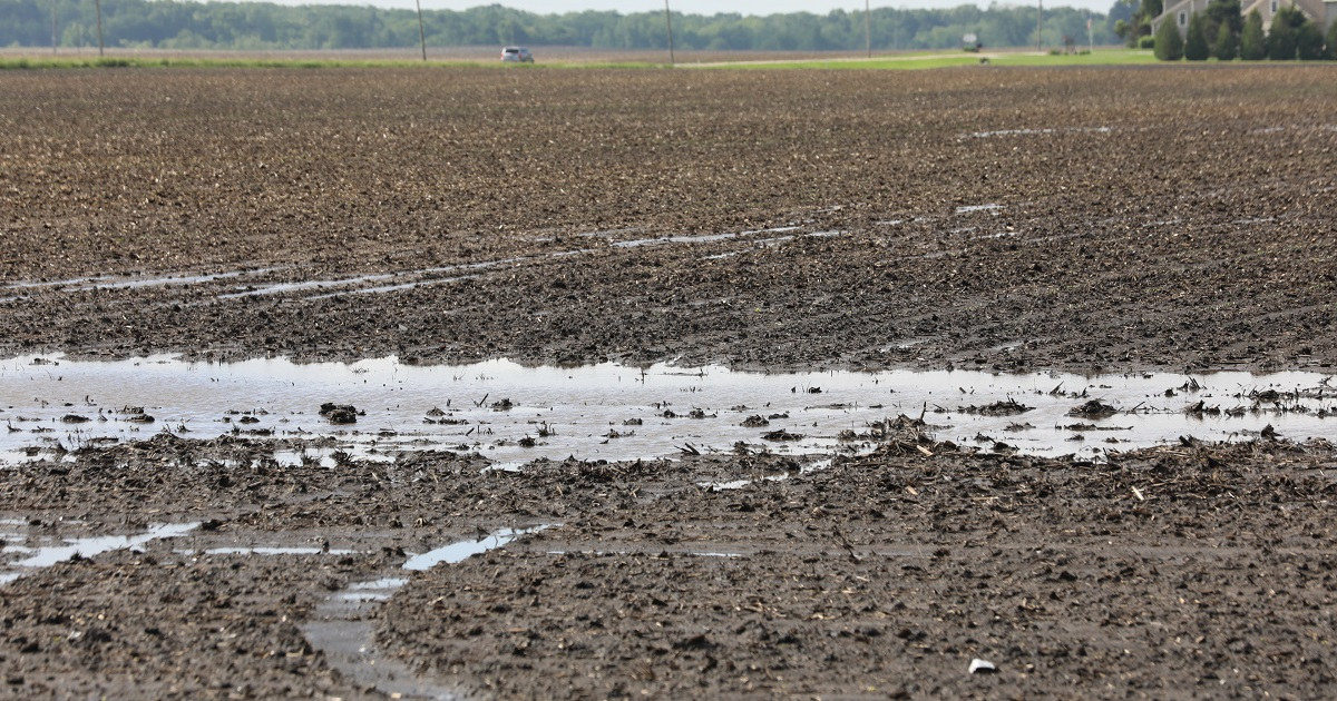 This agronomic image shows a flooded field in IL