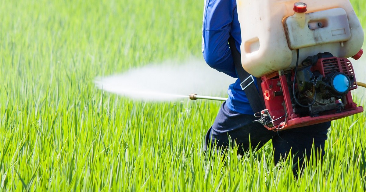 This agronomic image shows a grower spraying pesticide.