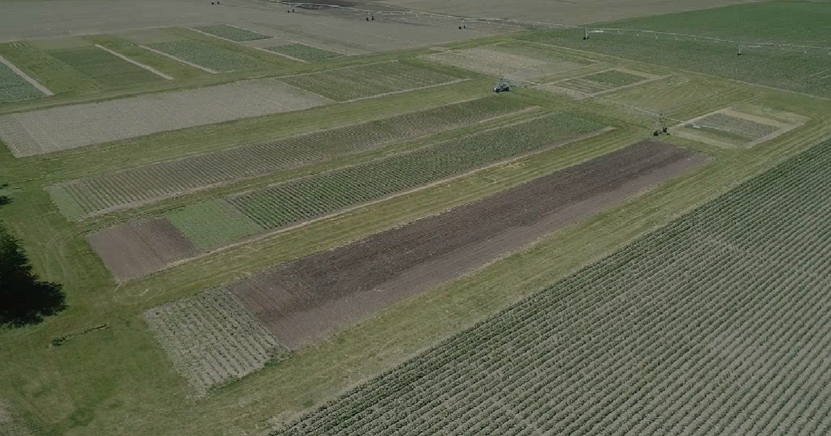 A photo from above of a field at the York, Nebraska, Grow More Experience site.