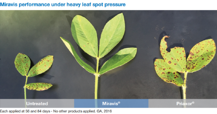 This agronomic image compares fungicide treatments in peanuts