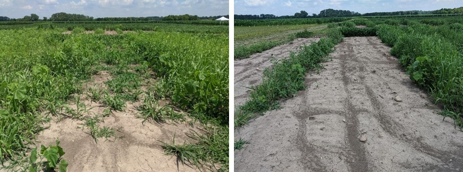 This agronomic compares soybean trials. Left: Valor® herbicide Right: Prefix® + TriCor® 4F followed by Tavium® Plus VaporGrip® Technology + Roundup PowerMAX® + adjuvants