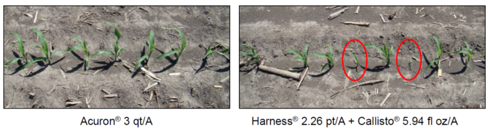 This agronomic shows corn herbicide trial comparisons