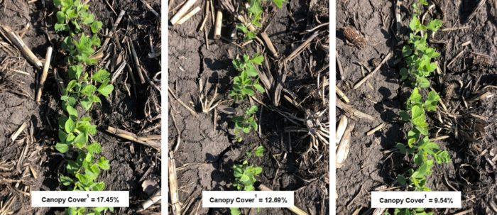 This agronomic image compares the impact of better crop safety and vigor on canopy closure