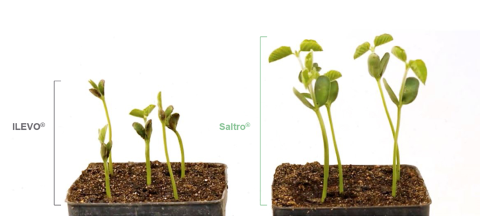 An emergence comparison of Saltro® and ILEVO® seed treatment from The Seedcare Institute™ in April 2018