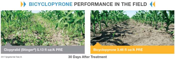 This graph compares bicyclopyrone performance in corn fields