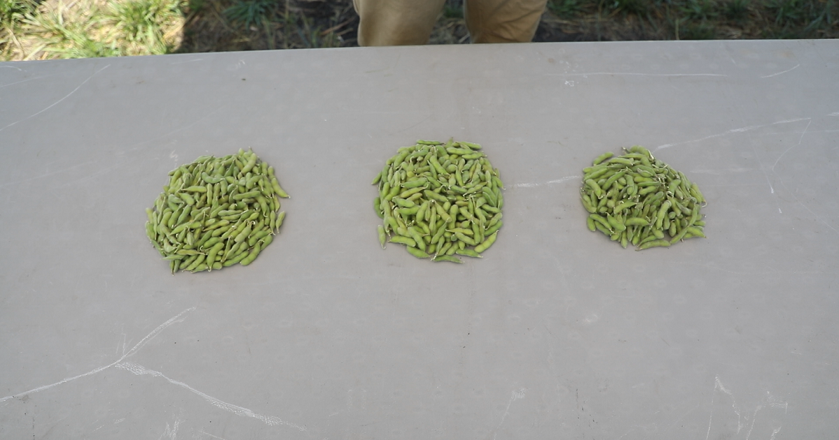Soybean piles collected from the following trial treatments at the Dixon, IL, Grow More™ Experience site: Saltro® + Boundary® 6.5 EC (Left); Saltro + Fierce® XLT (Center); ILeVO® + Fierce XLT (Right)