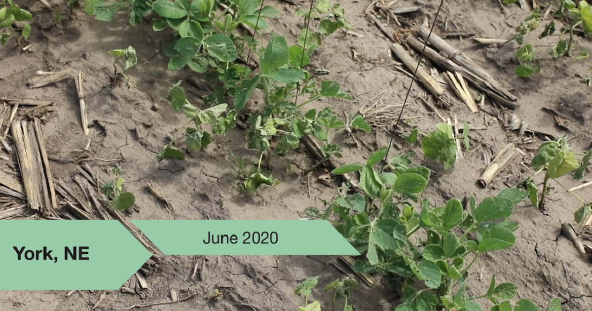 sudden death syndrome in soybeans
