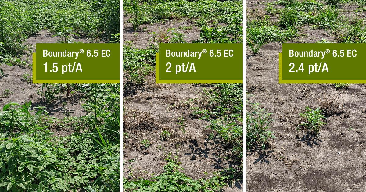 Boundary® 6.5 EC herbicide treatment comparisons in soybean fields