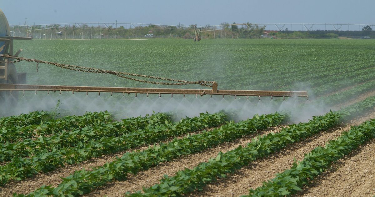 Foliar application of crop protection product