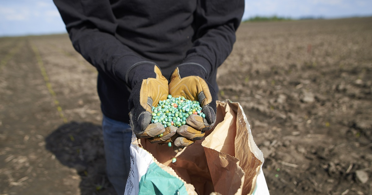 Treated seed in farmers hands